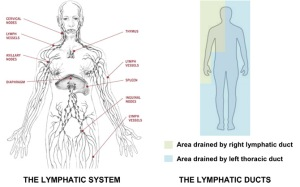 LYMPHATIC_SYSTEM (1)-1